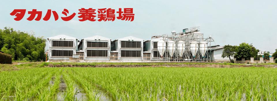 タカハシ養鶏場は埼玉県深谷市の鶏卵の生産・販売会社です。「新鮮で栄養豊富な安心できる卵を供給し消費者の健康な食生活の一端を担う」という企業方針を掲げております。